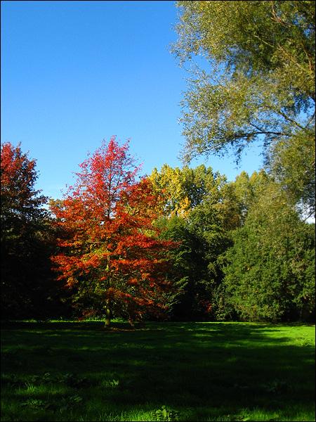 Herfstkleuren in Beatrixpark Schiedam