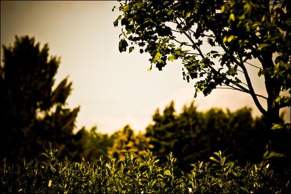 Goud groen