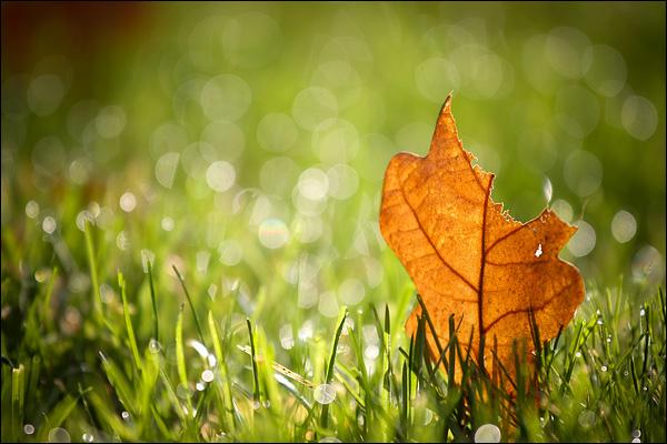 Herfst: Eikenblad in het gras
