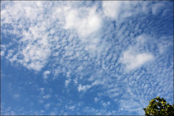 Schapenwolken