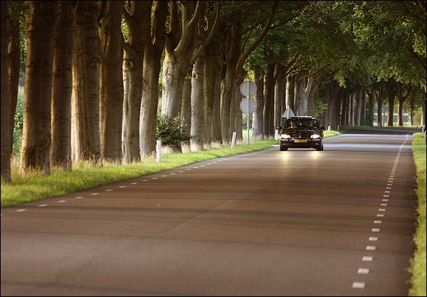 BMW 3 serie onder bomendak
