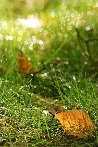 Blad en gras in tegenlicht