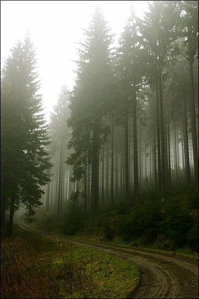 Bos van Willingen (Sauerland) in de mist