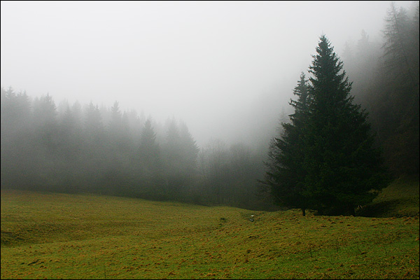 Willingen, Sauerland bos in de mist